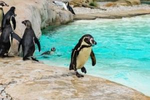 zoo-penguins